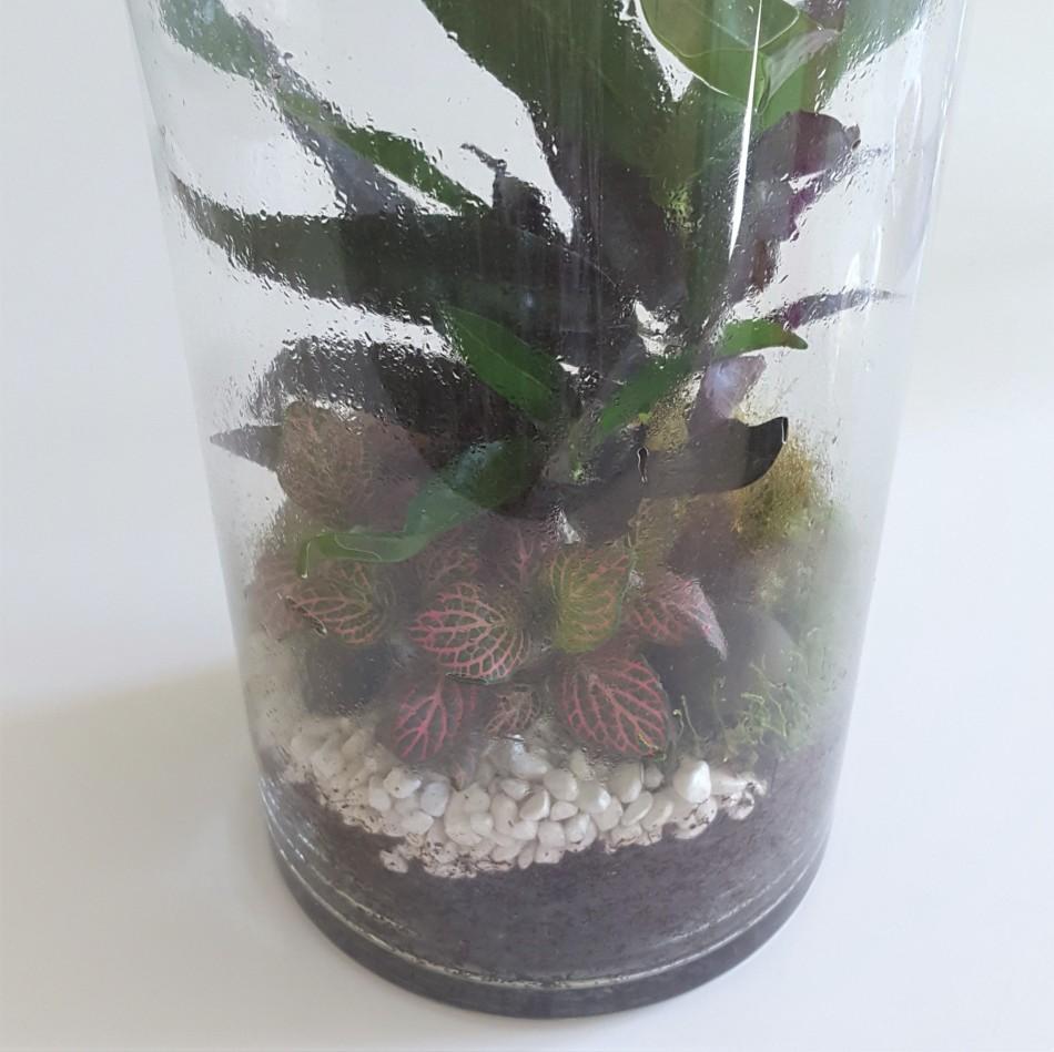ecosysteme-miniature10