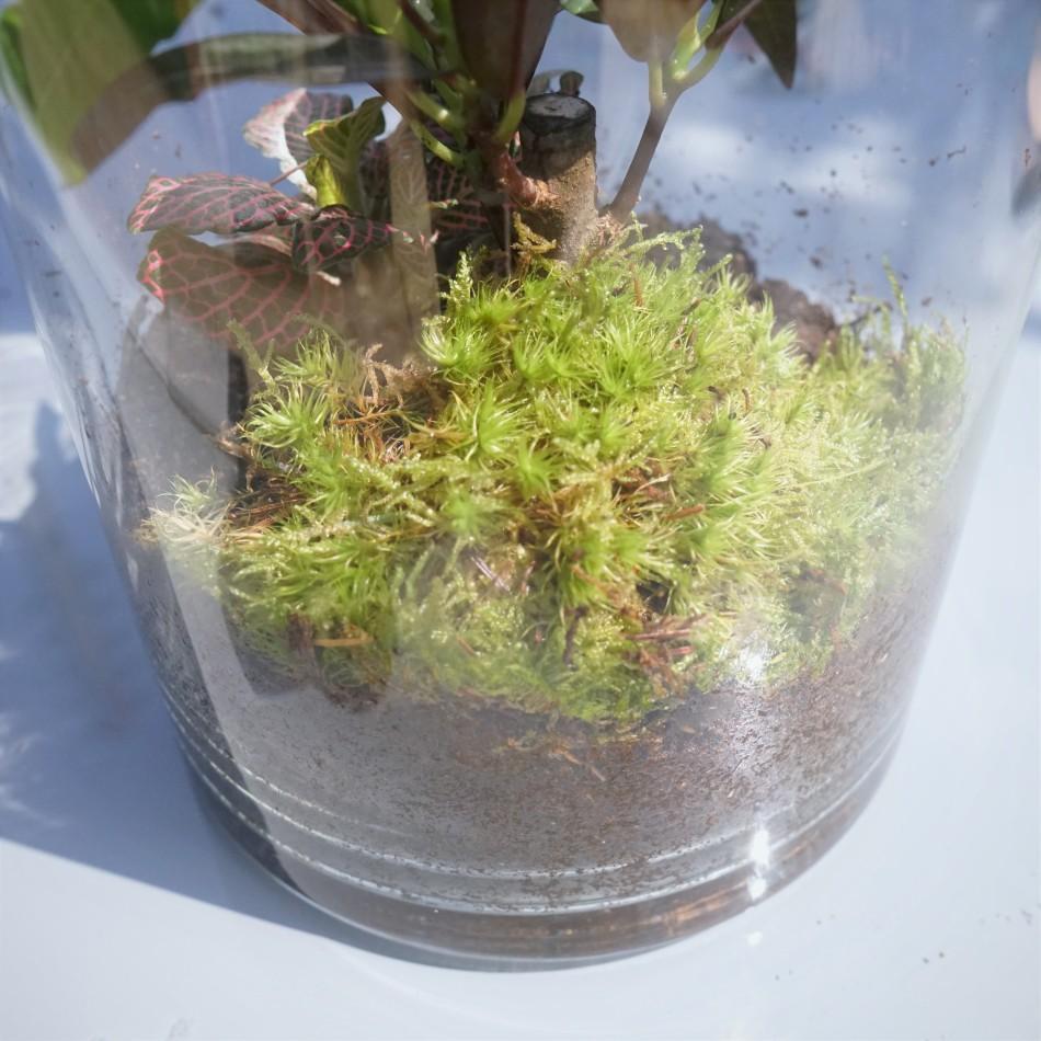 ecosysteme-miniature5