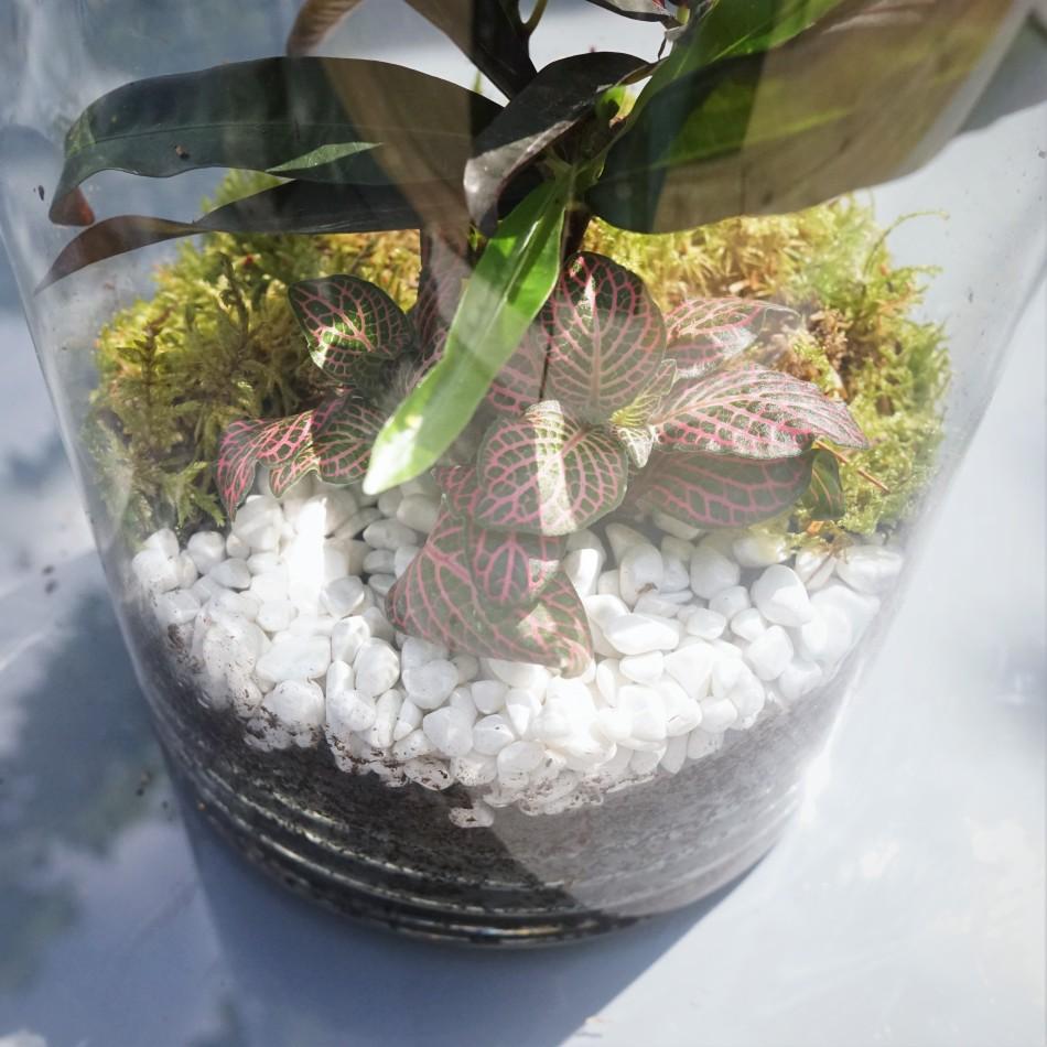 ecosysteme-miniature6