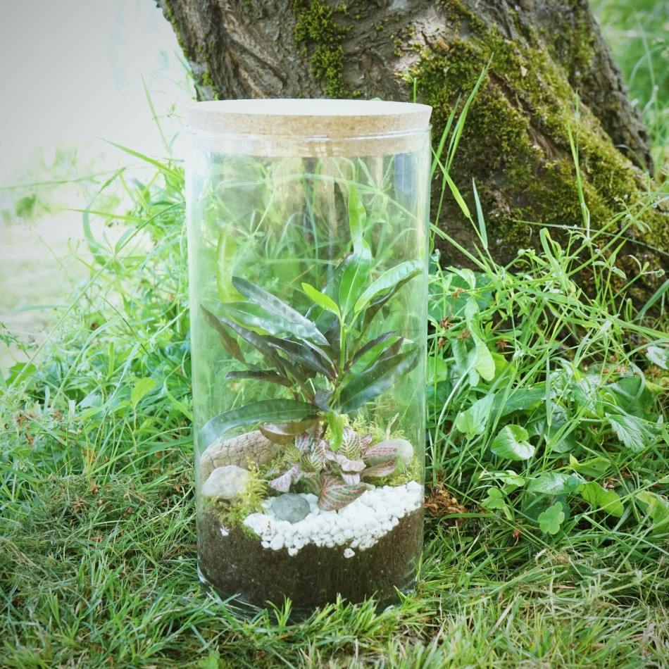 ecosysteme-miniature8