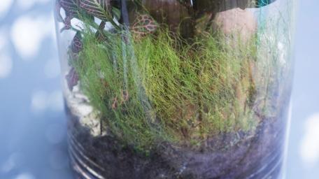 écosystème +1 (3)